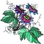 Remedes naturels : les plantes pour dormir