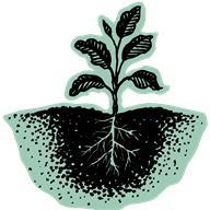 Le Camu-Camu c'est quoi et pourquoi cette plante peut atténuer la fatigue