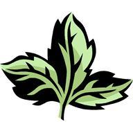 la plante angelique pour lutter contre la fatigue vaincre la fatigue. Black Bedroom Furniture Sets. Home Design Ideas