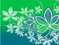 Existe-il des plantes médicinales efficaces pour lutter contre la fatigue