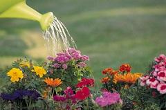Le jardin, source anti-stress