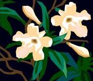 L huile essentielle de jasmin pour mieux dormir